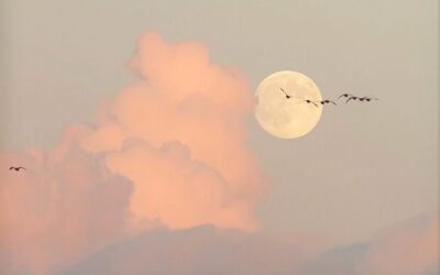 The Aquarius Full Moon 3rd-4th August By Ross